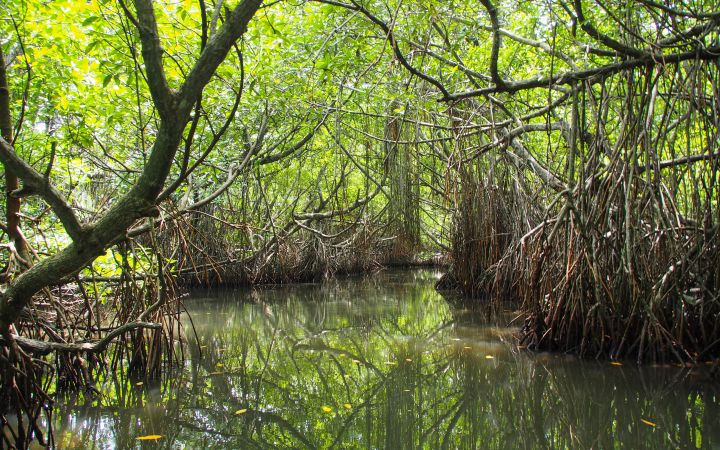 00001788_mangrovelagoon_preview.jpg